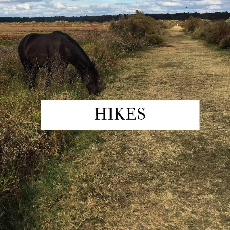 Florida Hikes for Families